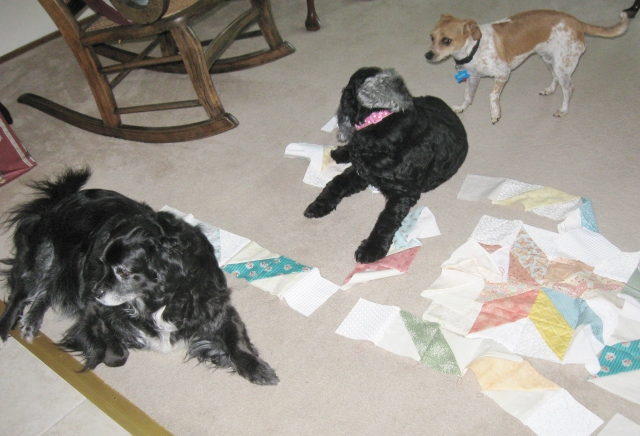 dogs in unfinished quilt blocks