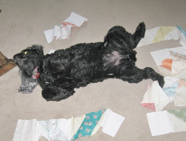 dog playing in quilt blocks